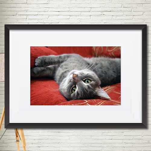 동물,꽃 포스터 매트액자 인테리어소품액자 가로 mtdmgr014
